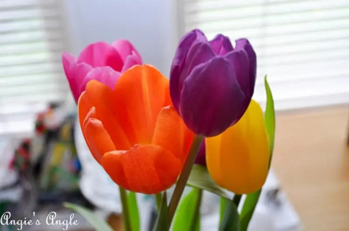 2017 Catch the Moment 365 Week 13 - Day 87 - Tulips Make Me Happy