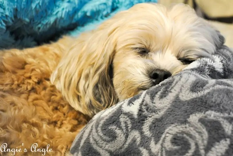 2017 Catch the Moment 365 Week 19 - Day 131 - Sleepy Roxy