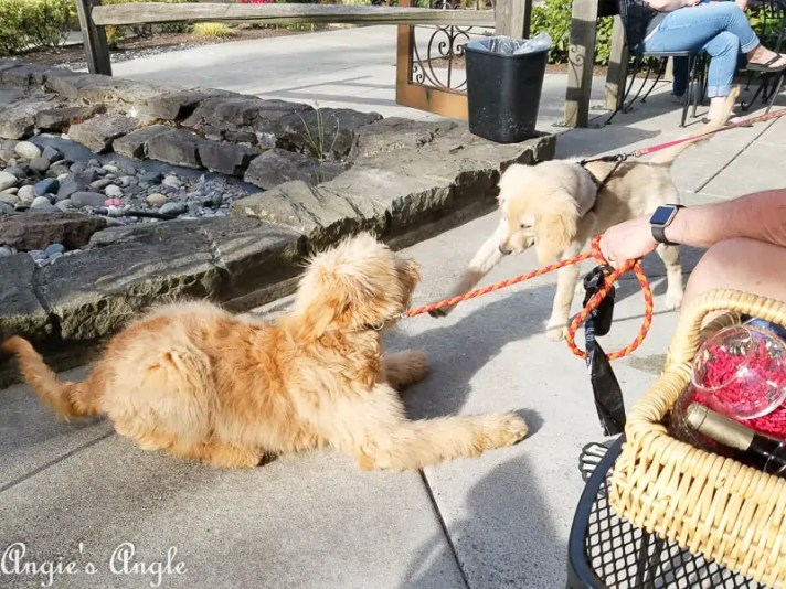 2017 Catch the Moment 365 Week 23 - Day 157 - Puppy Playtime at DogPaw Event
