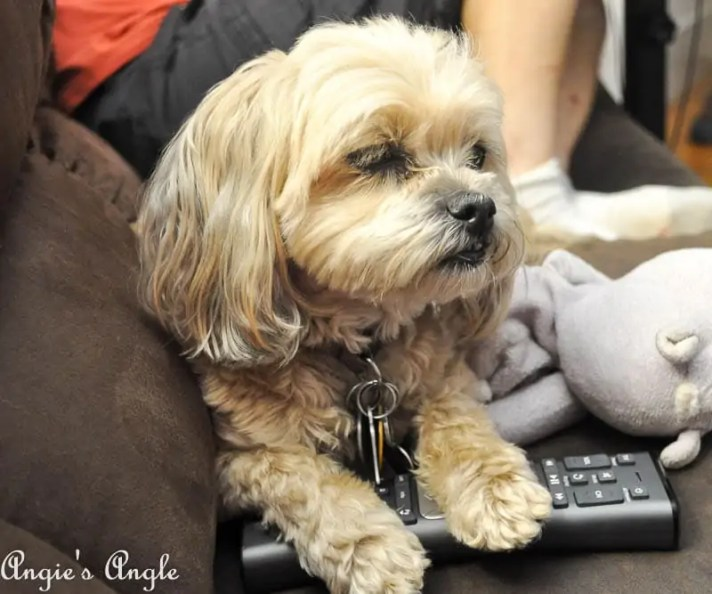 2017 Catch the Moment 365 Week 30 - Day 205 - Roxy Holding the Remote