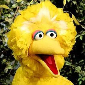 bigbird Ego Development
