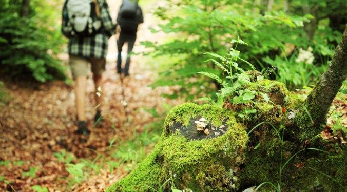 couple-walking-on-forest-path-(shutterstock-stokkete).jpg