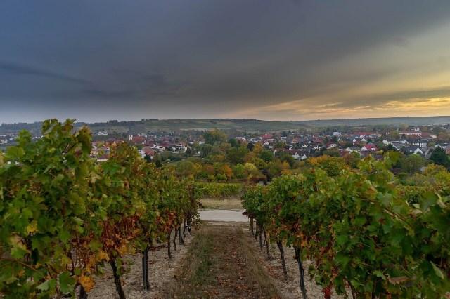 Vineyards, Weinberge Mosel