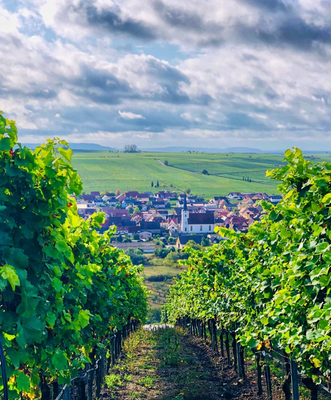 Volkach vineyards, Franconia