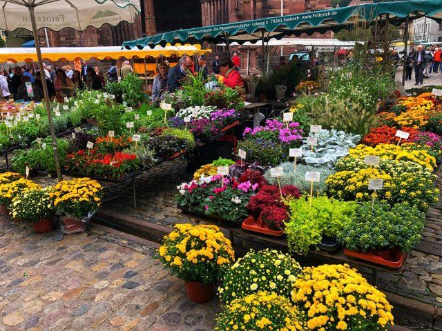 Freiburg Münsterplatz Flowers