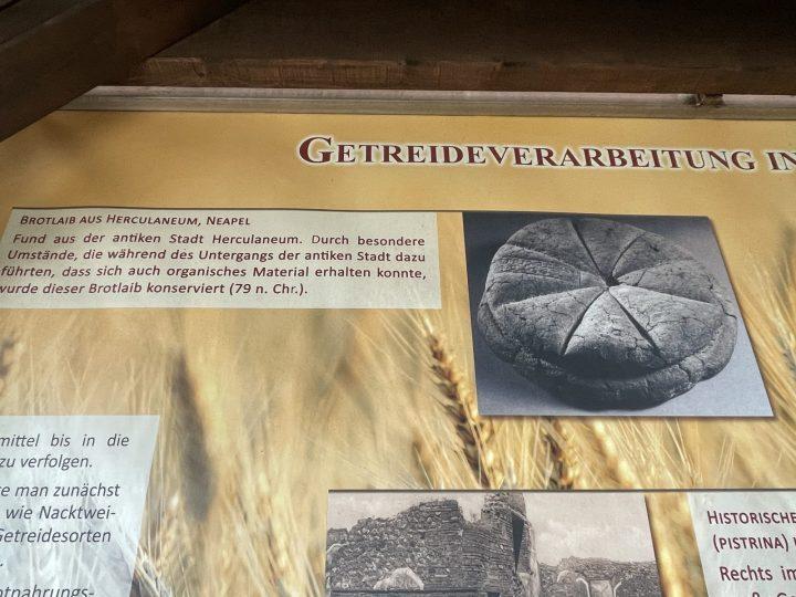 Roman bread baking