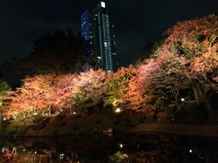We caught the last night leaf peeping on November 30