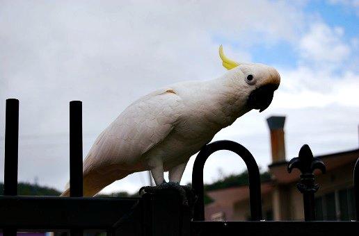 Fiche vocabulaire anglais pdf les oiseaux