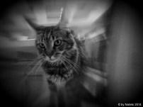 cat flash