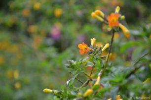 flowersoverflowers (3)