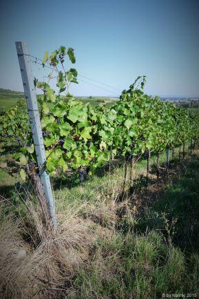 wine-wandering (2)