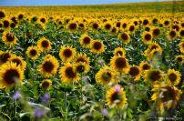 flowersoverflowers (9)