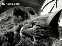 wpid-2015-10-16-21.15.38.jpg.jpeg