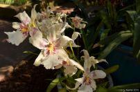 flowersoverflowers (13)