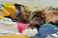 cat3 (3)