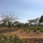 Agriculture Uganda South Sudan AID