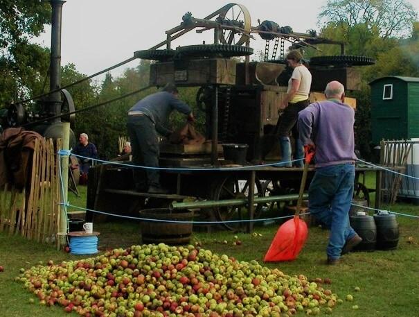Pressing cider apples