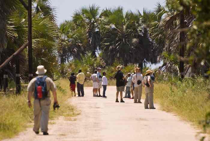 Field Group birders scan the tree tops