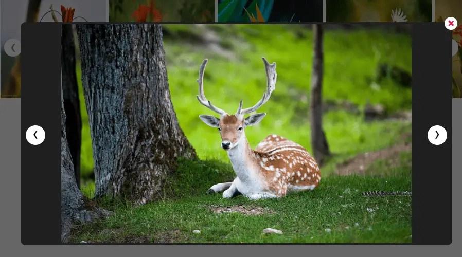 Image Slider With Lightbox For Angular 6+ | Angular Script