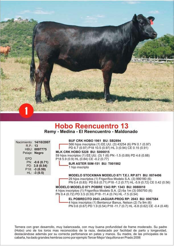 lote1_1