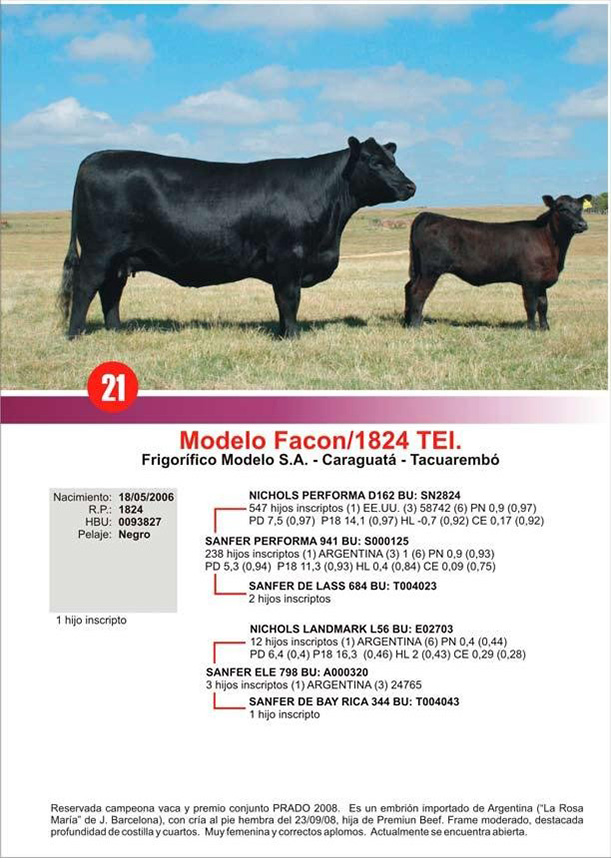 lote21_1