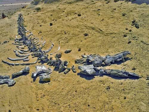 Viếng thung lũng cá voi hóa thạch ở Ai Cập - 6