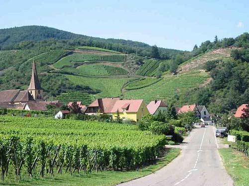 8 vùng rượu nho xinh đẹp nhất nước Pháp - 1