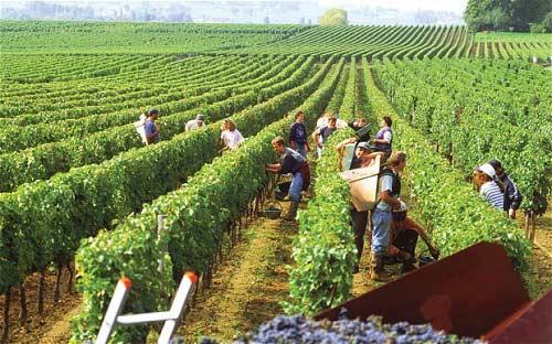 8 vùng rượu nho xinh đẹp nhất nước Pháp - 5