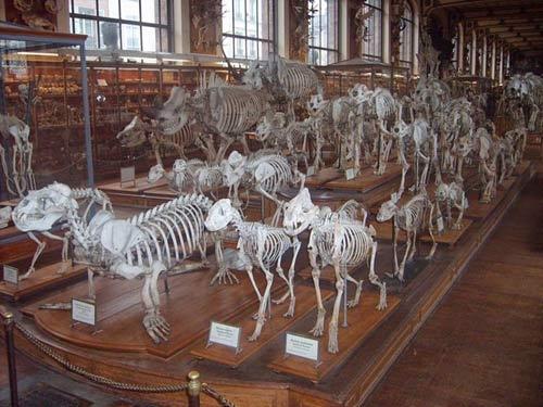 Cuộc diễu hành của những bộ xương ở bảo tàng Pháp - 4