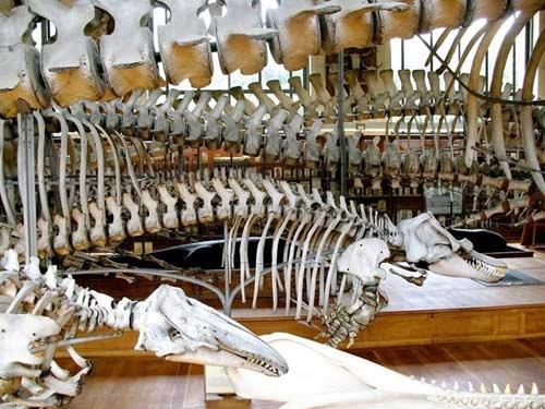 Cuộc diễu hành của những bộ xương ở bảo tàng Pháp - 7