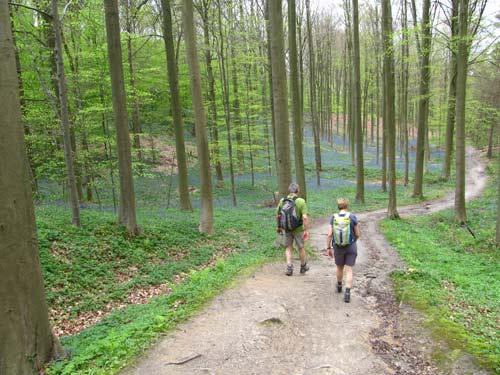 Lạc giữa khu rừng cổ tích đẹp mê hồn ở Bỉ - 10