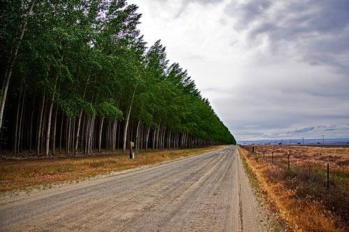Thăm trại cây thẳng tắp ngả sắc thu - 4