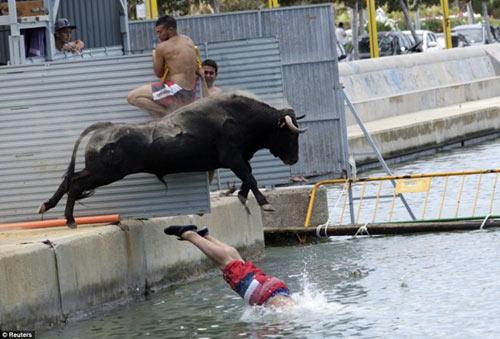 Lạ kỳ lễ hội bò tót rượt người ở Tây Ban Nha - 13