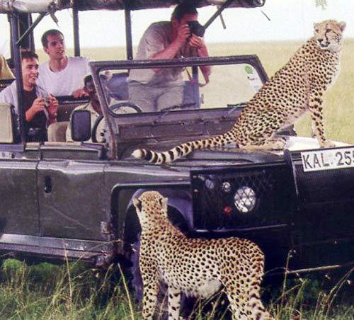 Khám phá thiên đường hoang dã Kenya - 4
