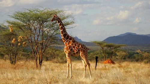 Khám phá thiên đường hoang dã Kenya - 2