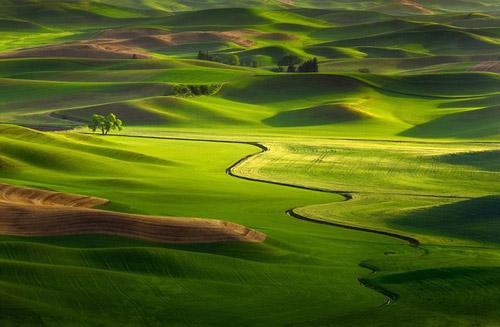 Ngắm những đồng cỏ đẹp như chốn bồng lai - 8
