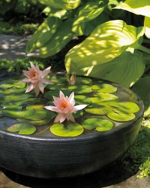 6 bước trồng hoa Súng cực 'đỉnh' - 9