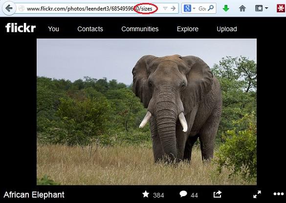 Cách tải ảnh từ Flickr