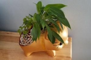 Tái chế heo đất/ chậu bông để trồng cây cảnh