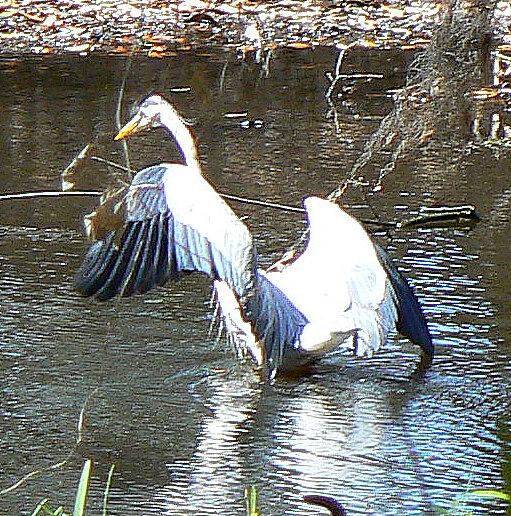 birds-pond-snake-024-1