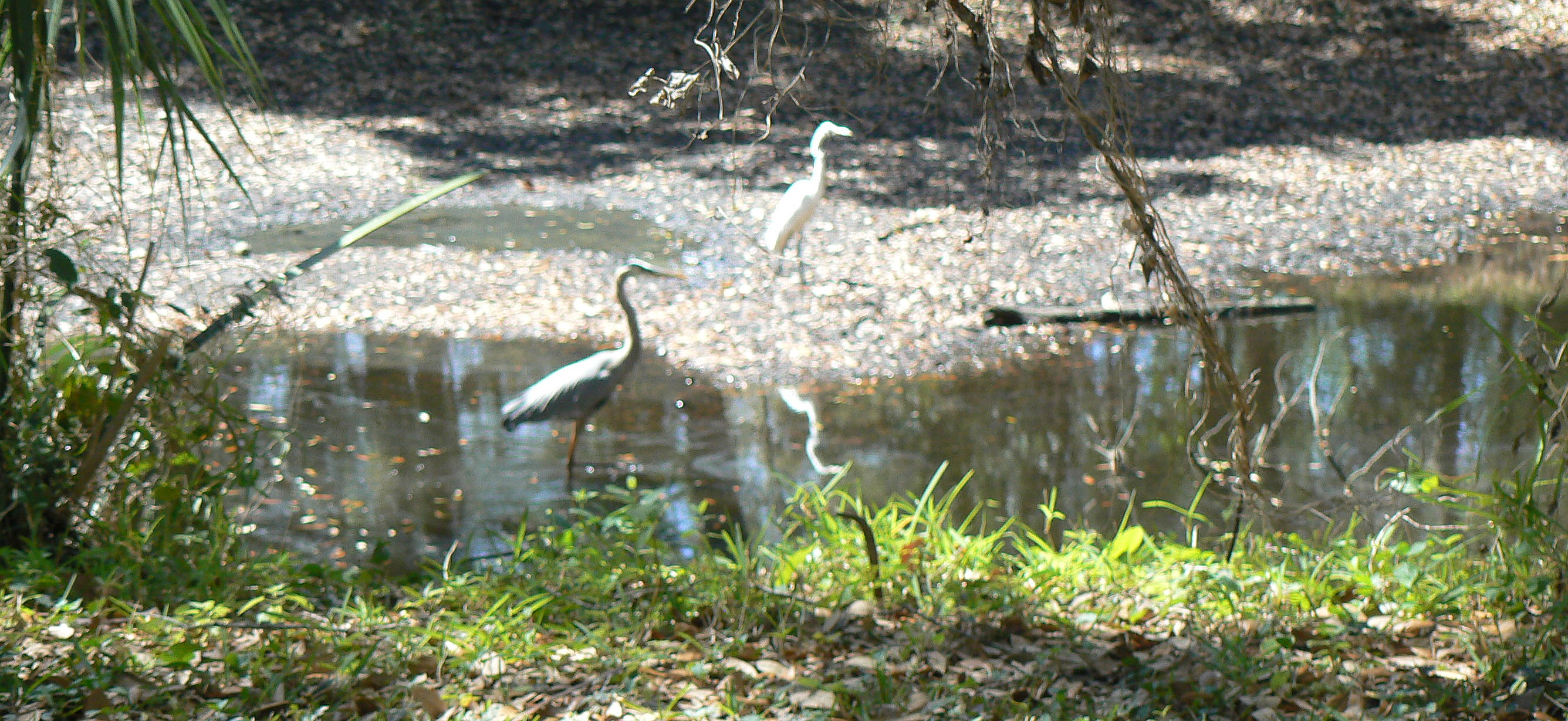 birds-pond-snake-035-1