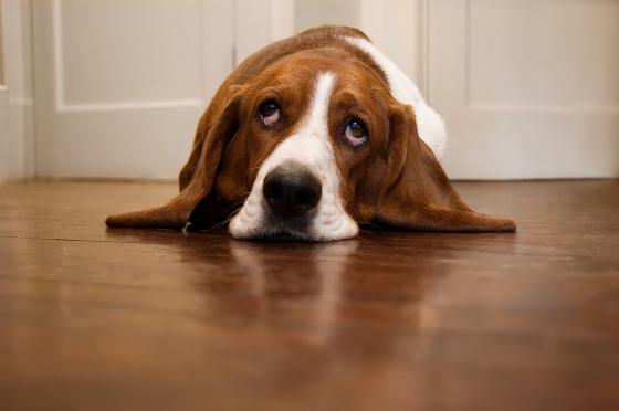 L'apathie du chien et du chat : comment y remédier ?