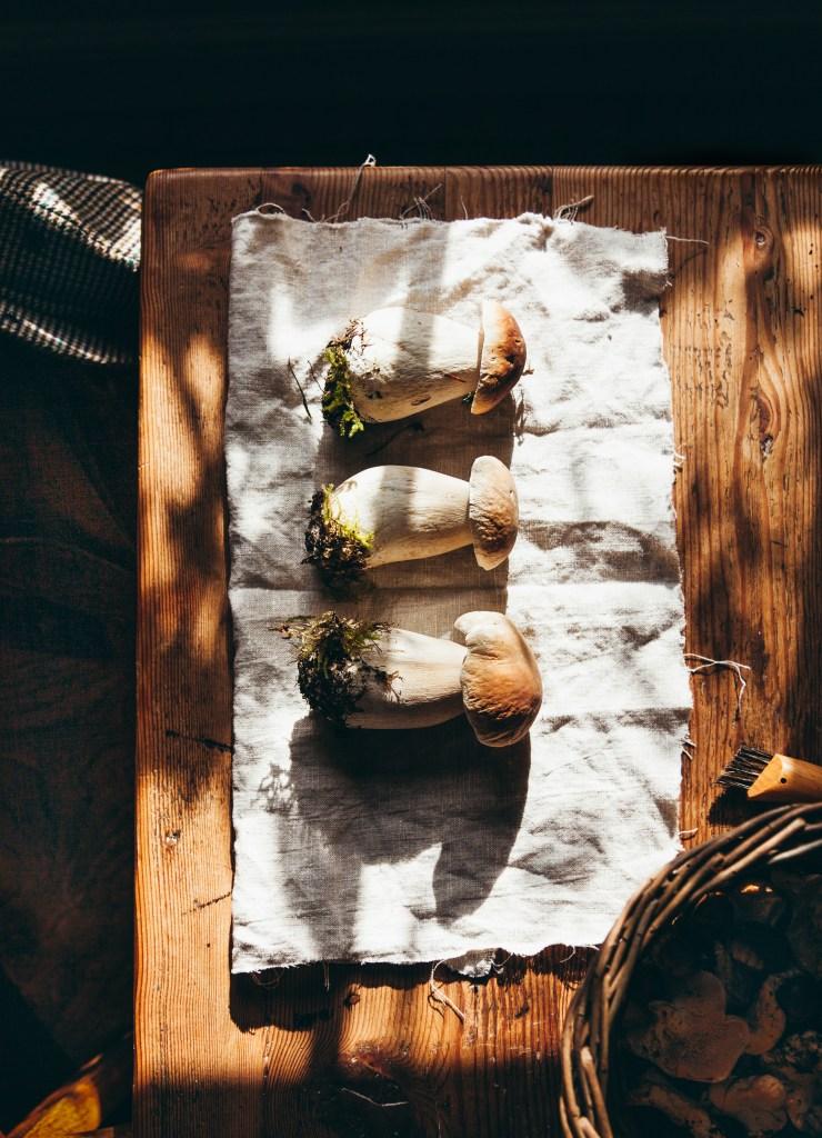 Porcini mushrooms, wild mushrooms