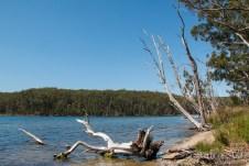 Burrill Lake -20