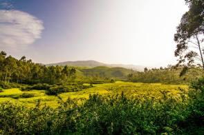 Devikulam Landscape
