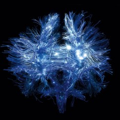 Brain Wiring Diagram Ups Battery Can We Figure Out The Brains Neurobanter