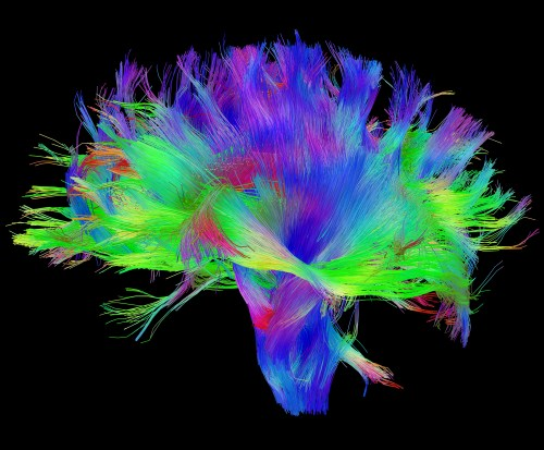 small resolution of diffusion mri of the human brain source human connectome project