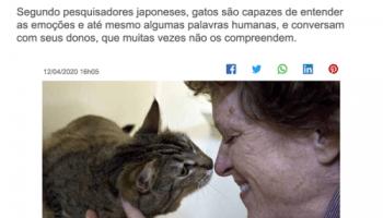 idioma felino funciona