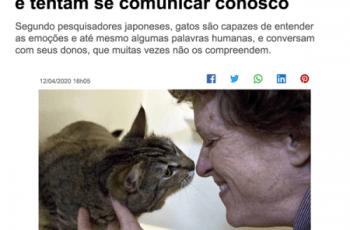 Idioma Felino Funciona? Entenda o idioma dos gatos