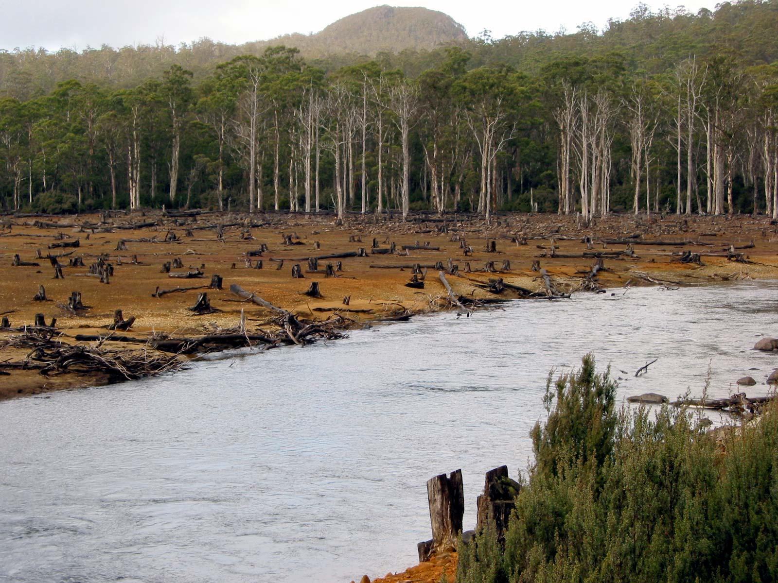 Habitat Fragmentation Increases Biodiversity Decline